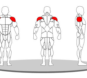 shoulder press - shinefitequipments.com
